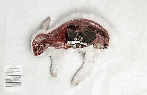 sigarette-animali2
